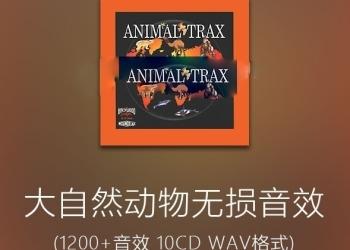 年费VIP专享大自然动物无损音效素材(狮子老虎大象蛇猴子猩猩鲸鱼青蛙等10CD)