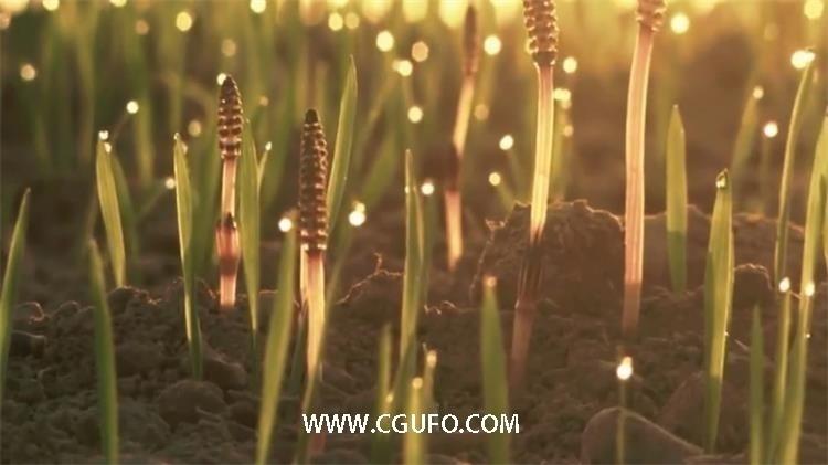 345水中的花草高清实拍视频素材