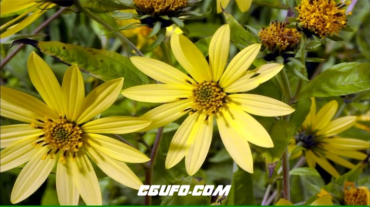 2193-植物鲜花季节变化交替雪山渲染花朵活力生长景色高清视频延时拍摄