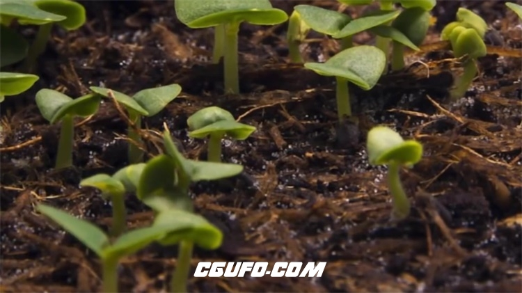 2194-植物种子发芽力量爆发奋斗励志形象公益宣传高清视频延时拍摄