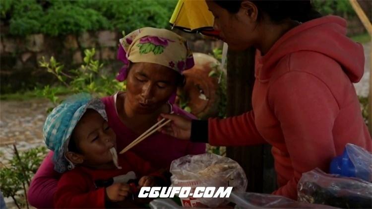 2198-中国云南普洱茶采集制作少数民族地理文化种植茶树高清视频实拍