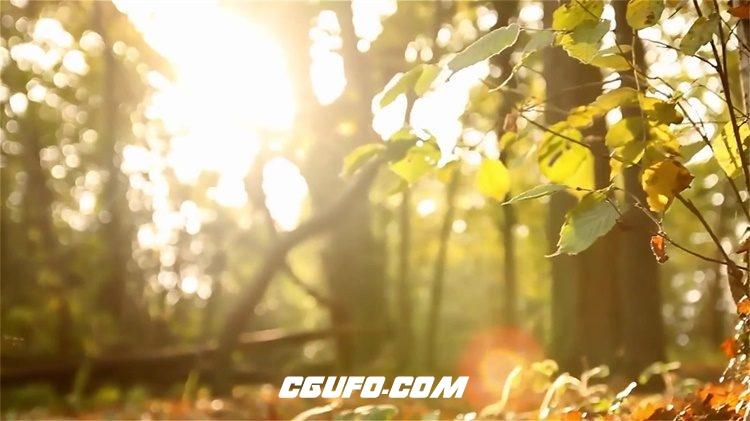 2230唯美清新自然落叶小草树木植物生长景色画面高清视频实拍