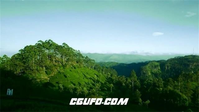 2294农场咖啡种植收获挑拣加工制作冲泡咖啡豆宣传片高清视频实拍