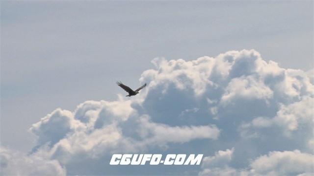 2327高空中老鹰拍打翅膀飞翔雪白云层风景动物生活高清视频实拍
