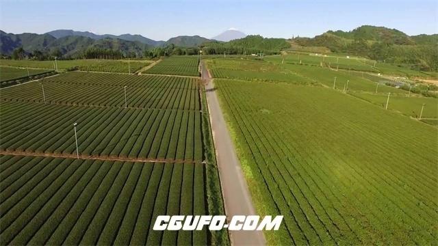 2369大自然翠绿茶园茶山唯美茶叶农场田野风光景色高清视频航拍