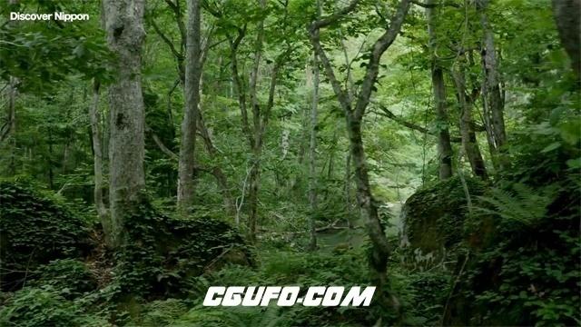 2414-日本清新秀丽大山森林绿树苔藓瀑布小溪超清实拍