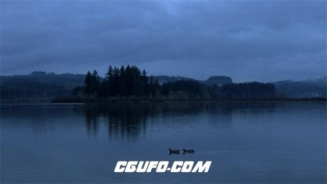 2421-清晨小鸭子湖面游荡令人陶醉自然风光高清视频实拍
