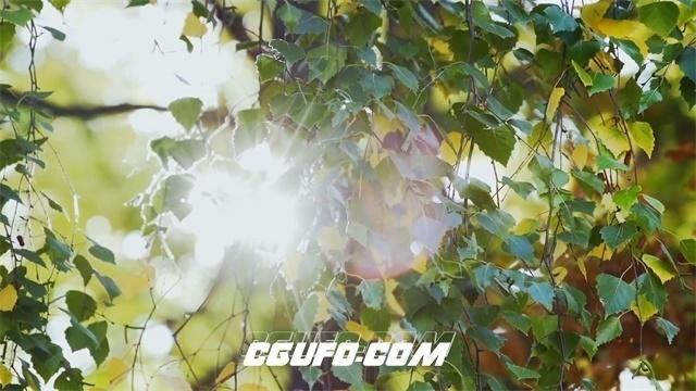 2684-灿烂阳光穿透叶子强光照射丛林植物生长唯美画面高清实拍视频素材