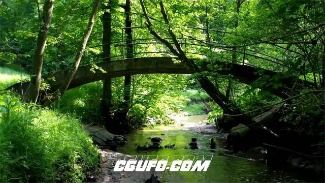 2726-树林中小桥流水清新景色大自然树木生长环境保护高清延时实拍