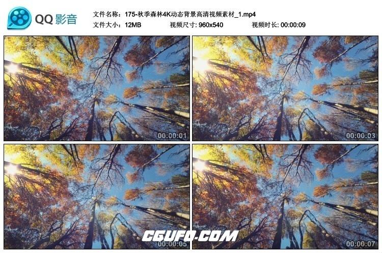 175-秋季森林4K动态背景高清视频素材