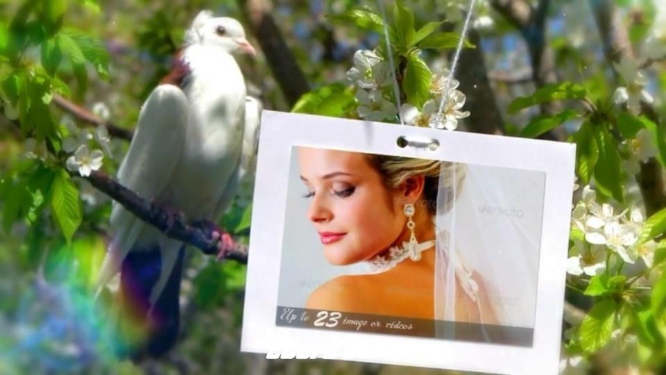 2683婚礼相册动画AE模版,Wedding Photo Gallery – Doves Slideshow