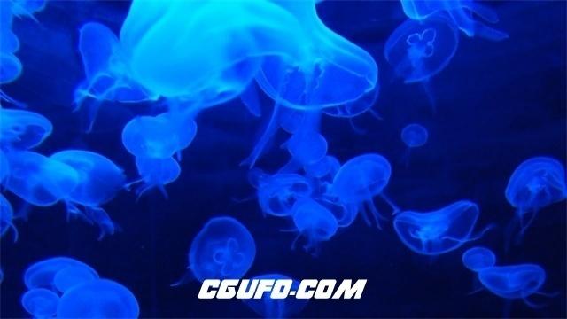 3192-梦幻蓝光水母浮游生物游动水族馆观赏水母生活姿态高清视频拍摄