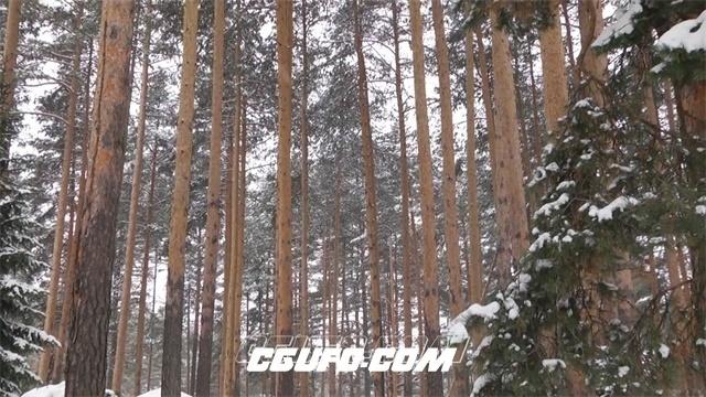 3250下雪后的森林自然美景高清实拍视频素材