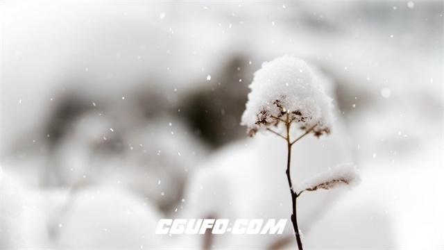 3301-4K唯美下雪飘落雪花飘飘堆积成花朵虚化背景特写高清实拍视频素材
