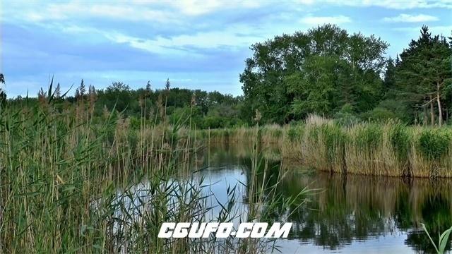 3311-清新大自然森林环境树木生长树林间小溪河景色延时高清实拍视频素材