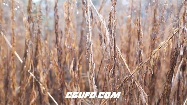 3319-雨后场景荒废土地枯萎植物干旱地区大自然保护宣传高清实拍视频素材