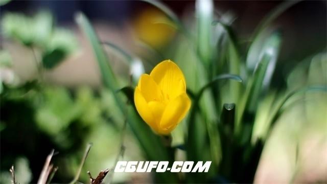 3328花朵特写高清实拍视频素材