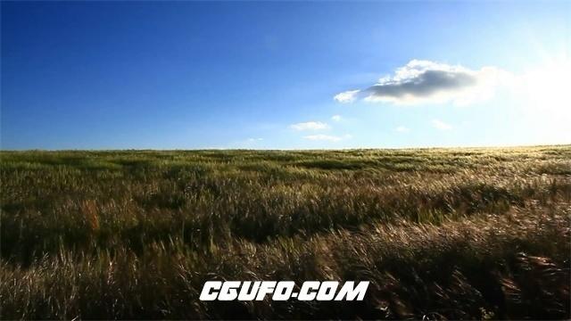 3336麦田蓝天农田农业高清实拍视频素材