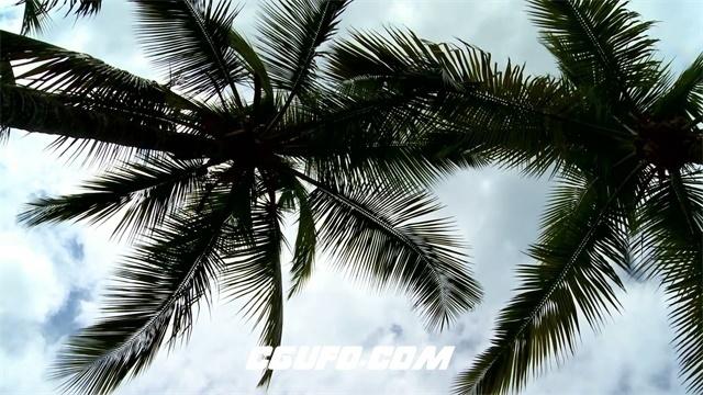 3341美丽的棕榈树高清实拍视频素材