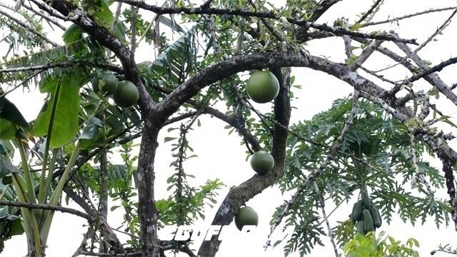 3346热带树木高清实拍视频素材