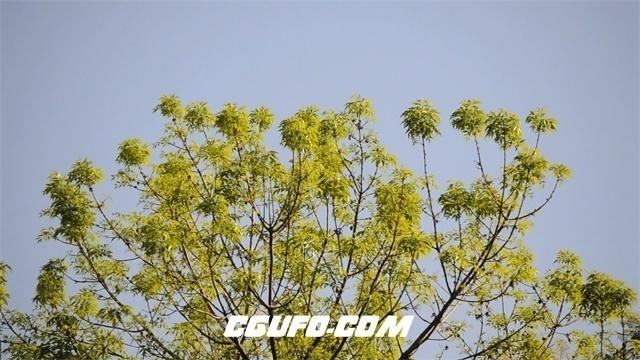 3353树叶飘动高清实拍视频素材