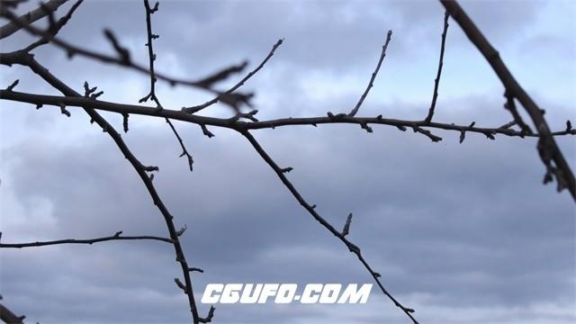 3354树枝天空高清实拍视频素材