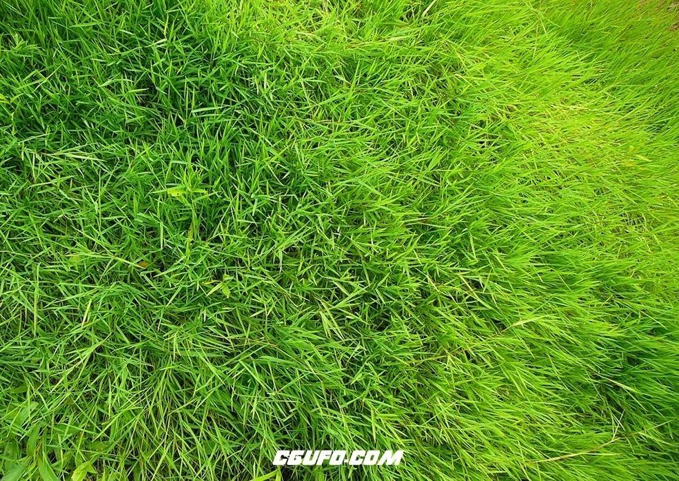 C4D绿草预设 Green preset