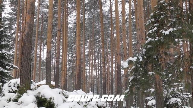 3385下雪后的森林自然美景高清实拍视频素材