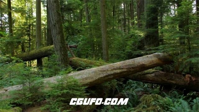 3432蓝天白云大自然森林环境树木生长树林间小路景色高清实拍视频素材