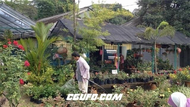 3441-田园风格花店员工浇水摆放盆栽植物鲜花售卖花店高清实拍视频素材