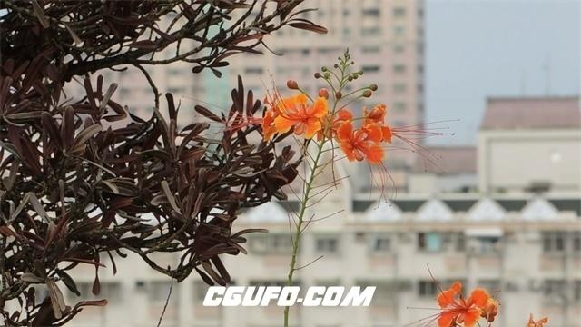 3445空旷建筑房屋顶楼花朵随风摇曳近景高清实拍视频素材
