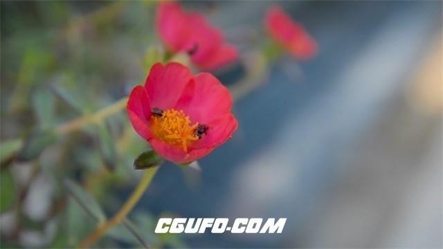 3448万物生长季节花园花丛鲜花盛开蜜蜂飞往花朵中采蜜高清实拍视频素材