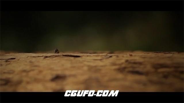 3452自然界大地生机蚂蚁生长爬行雨林落叶枯木高清实拍视频素材