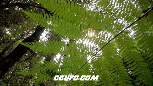 3464户外大自然热带雨林探险旅行穿越蕨类植物树木高清实拍视频素材