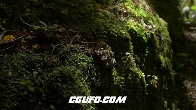 3469自然雨林阳光穿透抚摸岩石苔藓走过高清实拍视频素材