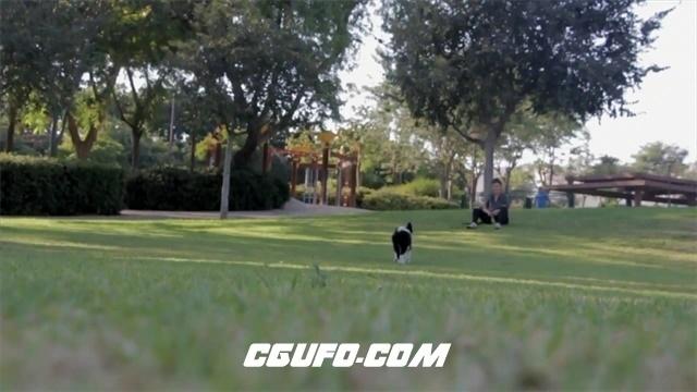 3482-日落黄昏主人与可爱小狗公园草坪中玩耍奔跑高清实拍视频素材