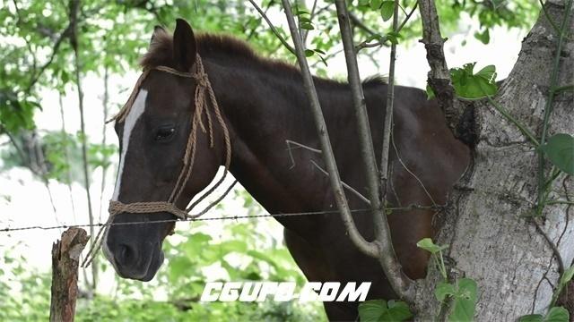 3484-阴凉树林底下棕色马树木旁吃草悠闲歇息动物姿态生活高清实拍视频素材