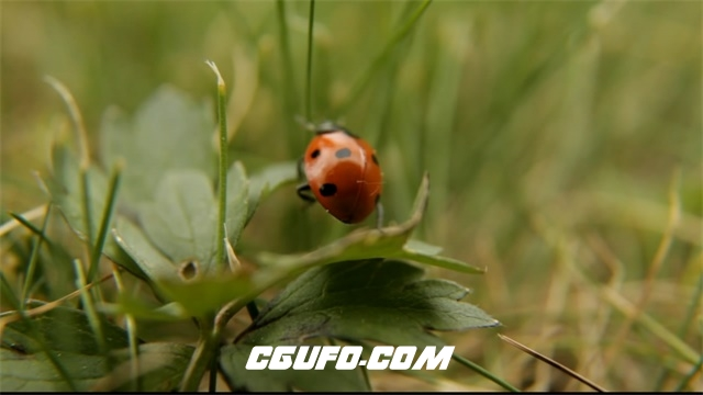 3543-瓢虫昆虫特写高清实拍视频素材