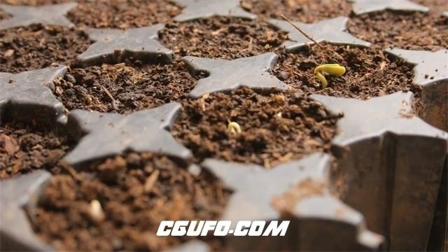 3544-种子生长高清实拍视频素材