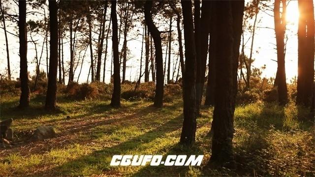 3553日落余晖洒落在树林里高清实拍视频素材