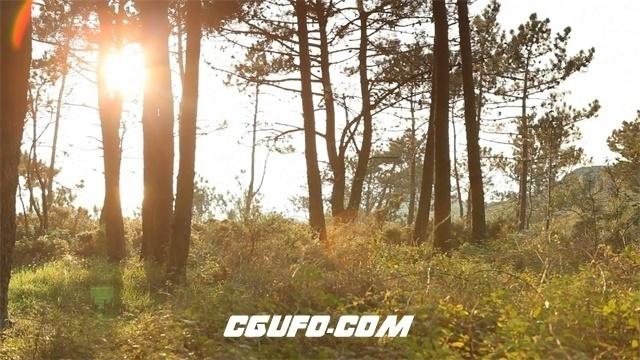3558森林美景高清实拍视频素材