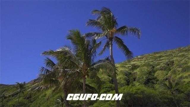 3587微风吹动树叶高清实拍视频素材