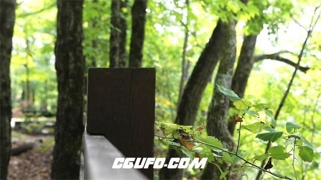 3628公园树枝树叶高清实拍视频素材