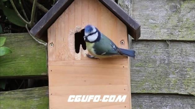 3865小鸟窝高清实拍视频素材