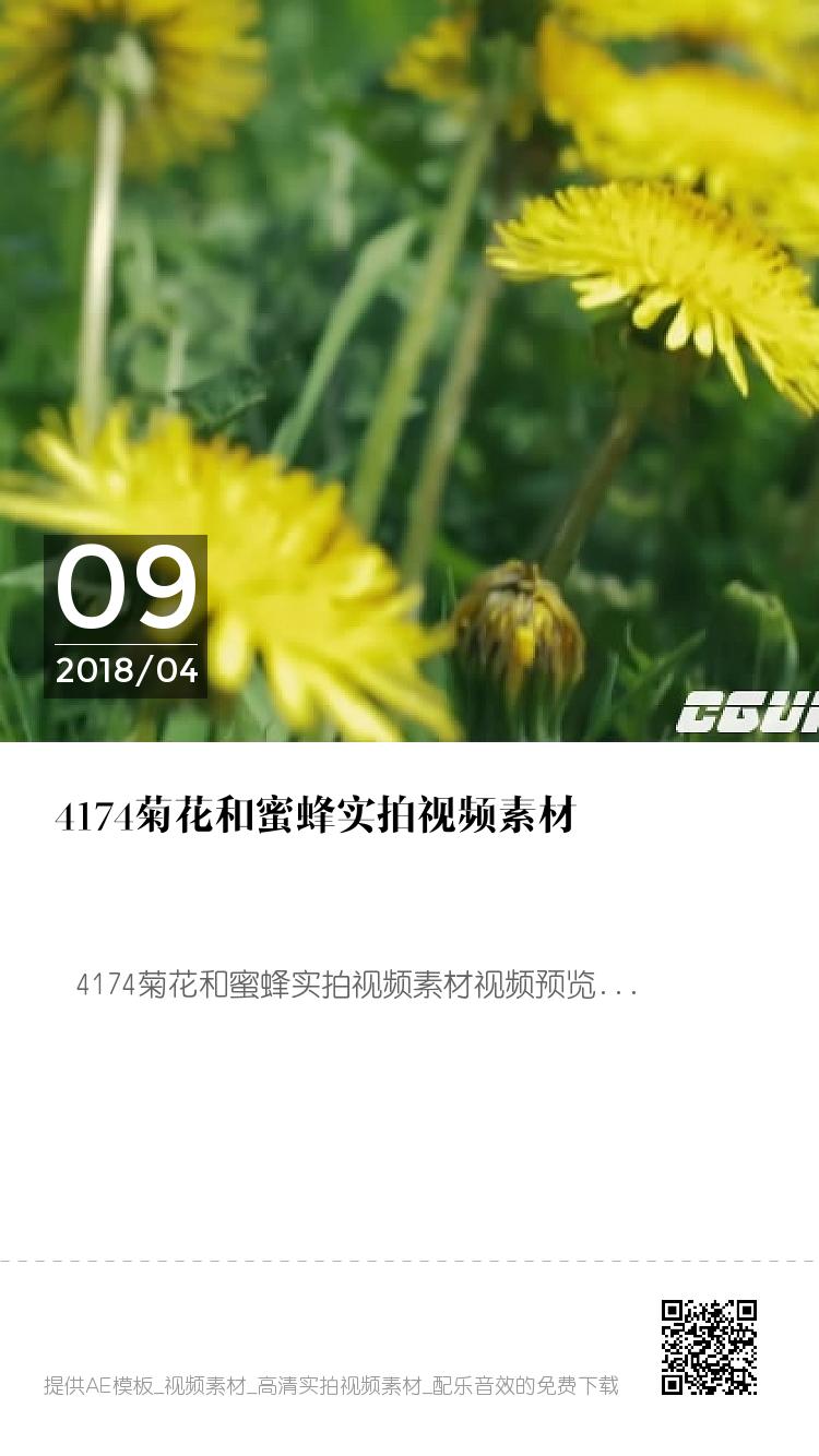 4174菊花和蜜蜂实拍视频素材 bigger封面